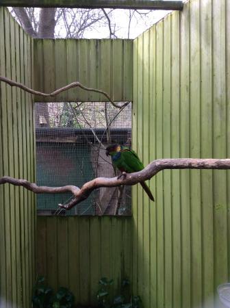 Shaldon, UK: Parrot