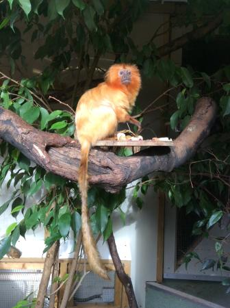 Shaldon, UK : Tamarin