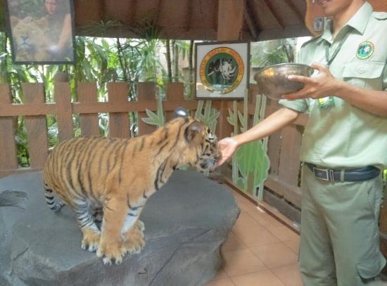 great moment with my beloved family at taman safari prigen picture rh tripadvisor co za