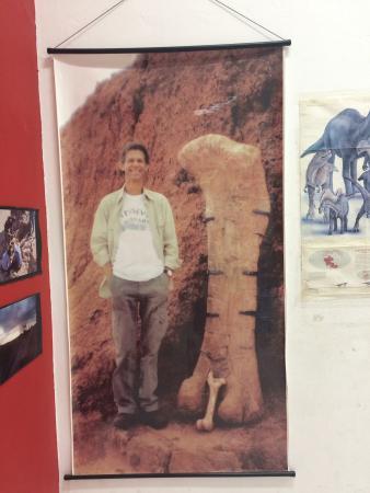 Resultado de imagem para museu de paleontologia marilia