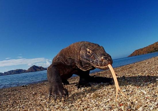 Visit Komodo Adventure