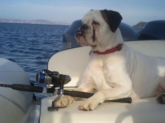 Province of Olbia-Tempio, Italia: cane pescatore!