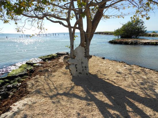 Hacienda Tres Rios Resort & Nature Park: Beach