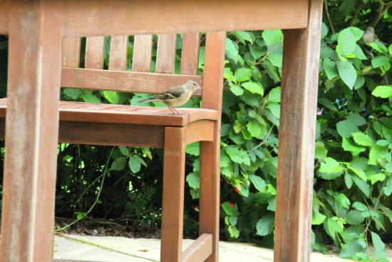 Dunwich, UK: Cheeky Birds on the Terraces at Dingle Hill Tearooms