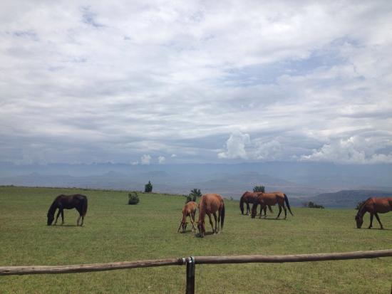 Bergville, Sør-Afrika: photo4.jpg