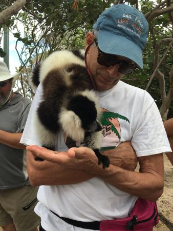 North Sound, Virgin Gorda: Meeting my first Lemur