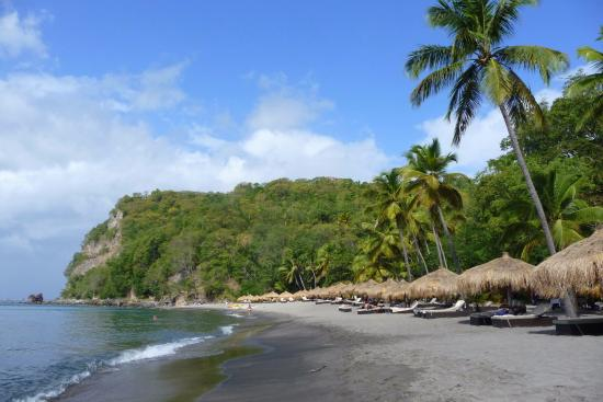 Anse Chastanet Beach And Reef Photo