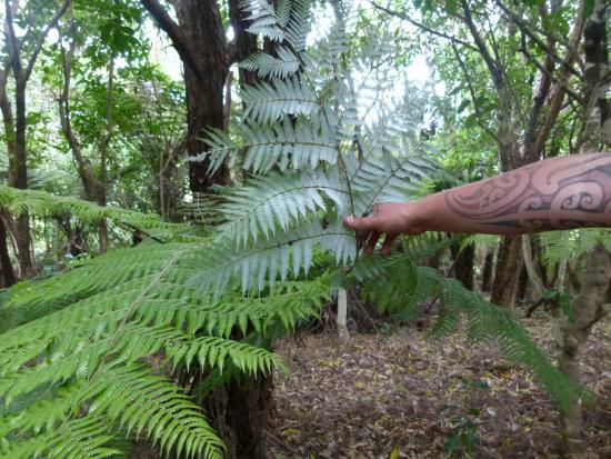 Waiheke Island, New Zealand: Bianca's Maori tatoos and silver fern