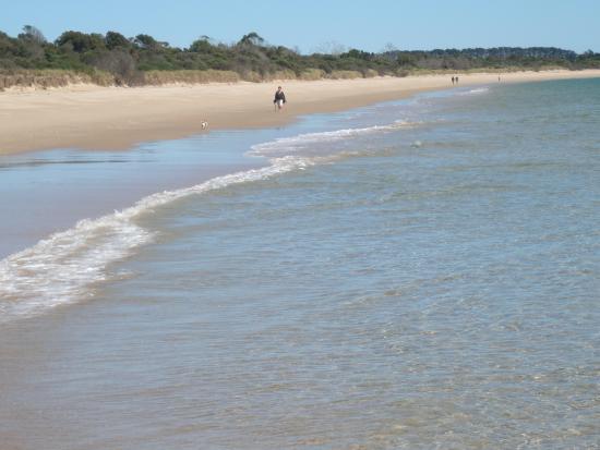 Bridport, Australië: Adams Beach for doggie visitors