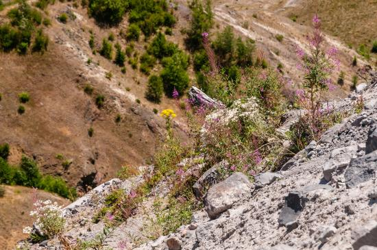 Amboy, واشنطن: Wildflowers Have a Foothold