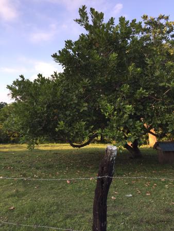 Crooked Tree, Belize: photo2.jpg