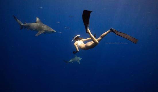 Photo By Hunter Ledbetter Florida Shark Diving Jupiter Tripadvisor