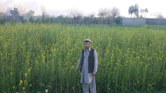Jalalabad, أفغانستان: Safi