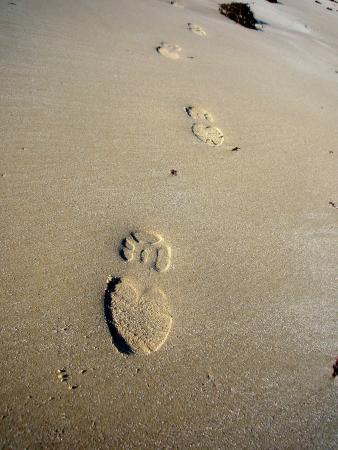 Bridport, Austrália: Secluded beaches to discover