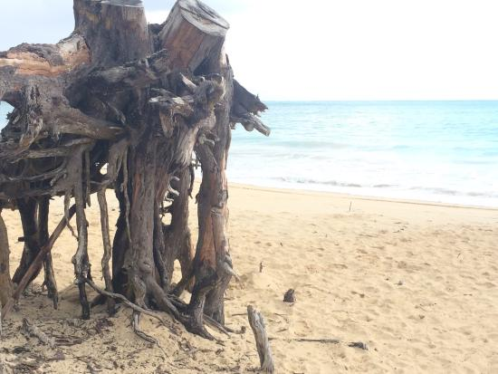 Bellows Field Beach Park: photo2.jpg