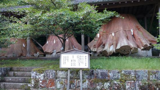 Unaki Hime Shrine: 伐採処理した切り株