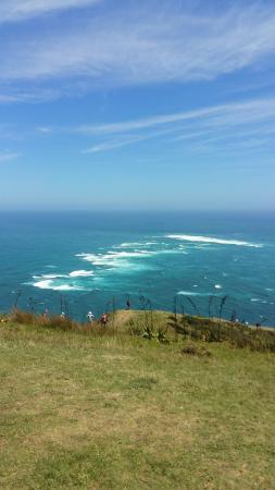 Kaitaia, Nueva Zelanda: 20160125_125159_large.jpg