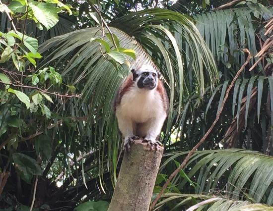 Jungle Land Panama: Day Excursions: photo2.jpg