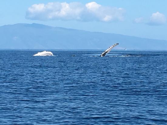 Wake Maui: photo1.jpg