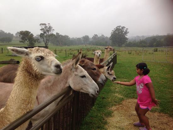 Picton, Australia: photo8.jpg