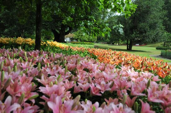Naestved, Denemarken: Liljer i parken