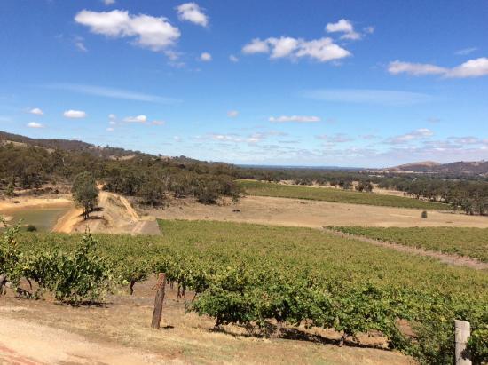 Moonambel, Australia: View of the vineyard