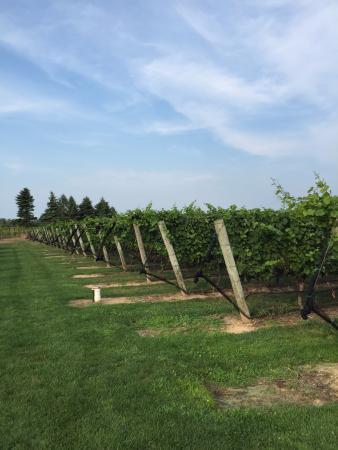 Southold, Nova York: the vineyard
