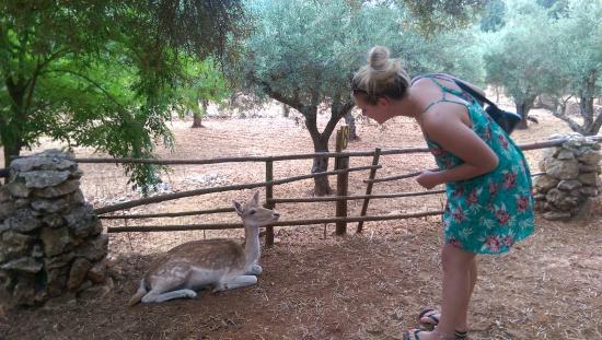 Volimes, Yunani: friendly deer
