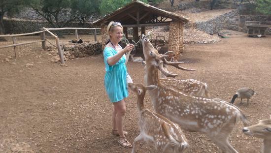 Volimes, Yunani: feeding the free roaming deer
