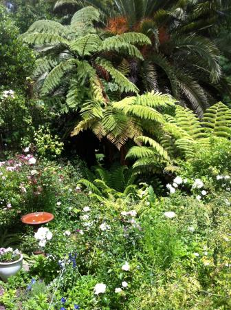 A Woodlands Retreat: beautiful garden