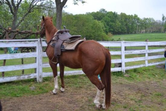 Danville, Πενσυλβάνια: Horseback Trail Rides, Pony Rides, Farm Animals, Organic Produce