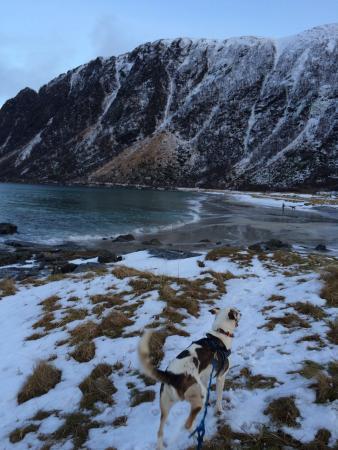 Risoyhamn, นอร์เวย์: Walking the dogs on the beach
