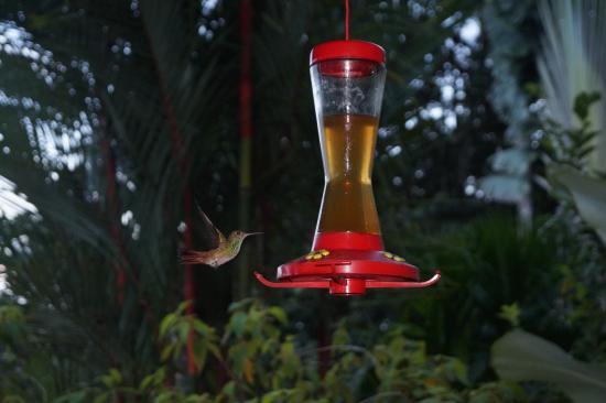 Isla San Cristobal, Panama: Hummingbird