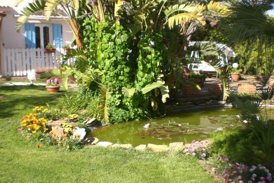Giardino con laghetto for Laghetto con ninfee