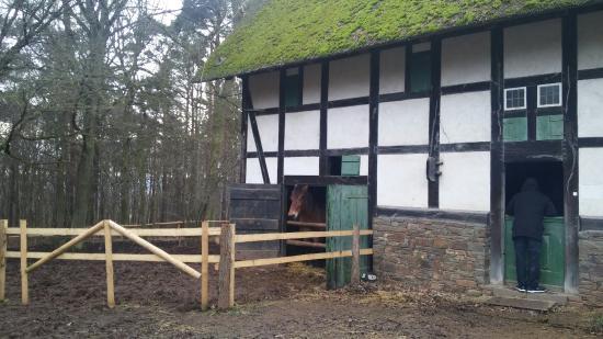 Mechernich, Alemania: 20160124_141153_large.jpg