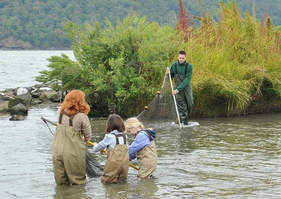 Yonkers, Nova York: Youth Seining Program from our Marsh and Beach