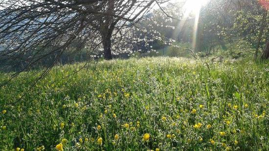 Sospel, Frankrike: printemps près du potager
