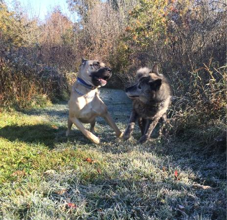 Wallkill, NY: Pups playing