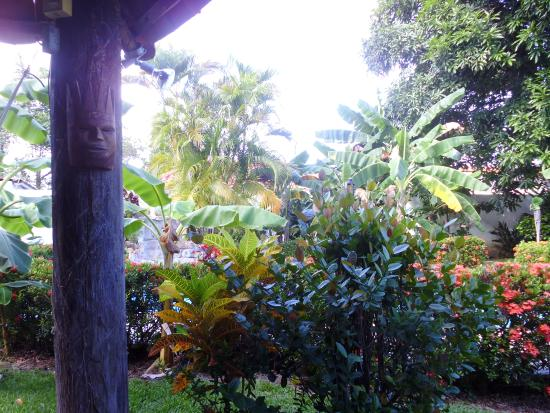 Chame, Panama: View of  garden of fruit trees ...