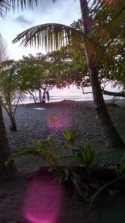 Dreamy Contentment: Sunset on beach through trees