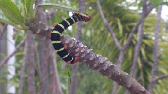 Worthing, Barbados: Park-Bug