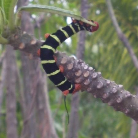 Worthing, Barbados: Park-Bug-2
