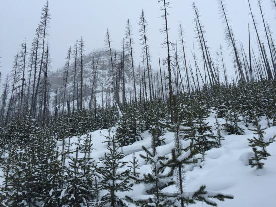 Foto de Kootenay National Park