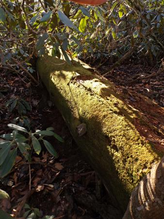Bent Creek Experimental Forest: Moss along the trail.