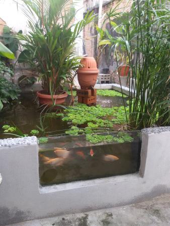 Nice Aquarium Fish Exhibition: Outdoor Ponds .Fishing The Leaping Arowanas. 2  Levels Of Aquarium