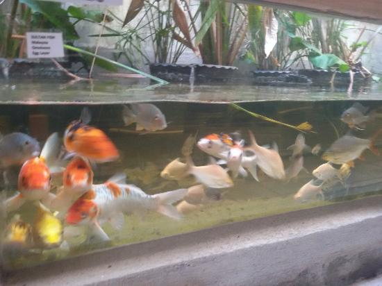 Aquarium Fish Exhibition