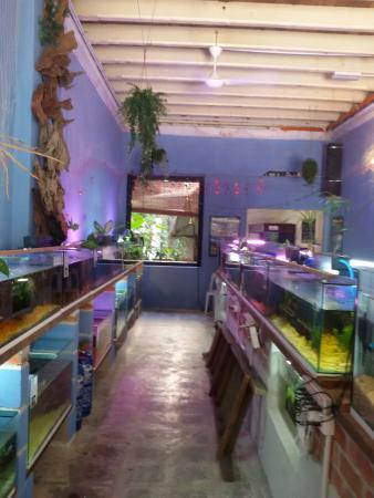 Aquarium Fish Exhibition: Outdoor Ponds .Fishing The Leaping Arowanas. 2  Levels Of Aquarium