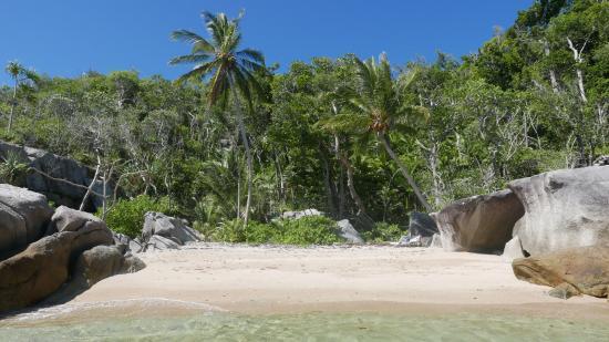 Zdjęcie Bedarra Island