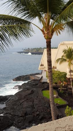 a coconut tree can be easily reached picture of sheraton kona rh tripadvisor com