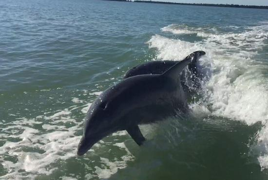‪Native Guides Sanibel-Captiva Charter services‬